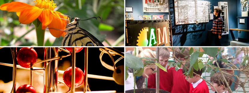 Visit both MAD & Stratford Butterfly Farm with your School