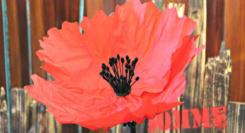 New exhibit – Mechanical Poppies